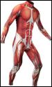 マッスル・スキン・スーツ(Muscle Skin Suit)