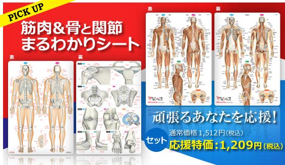 筋肉&骨と関節まるわかりシート20%OFF