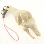 骨格キーホルダー(膝関節)