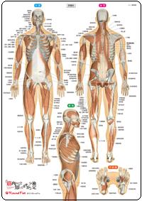 筋肉下敷き