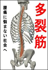 筋肉総選挙